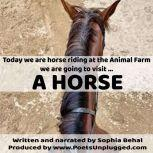 A Horse, Sophia Behal